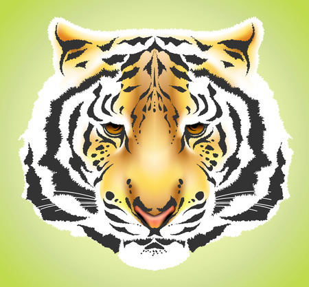Tiger head colorful high quality illustration - gradient mesh Vector