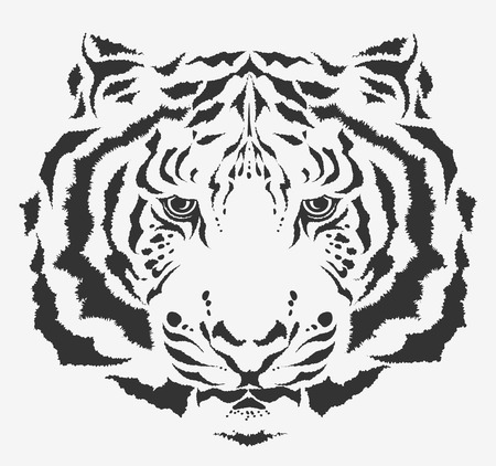 irbis: white tiger