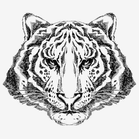 isolated tiger: disegno di tigre  Vettoriali