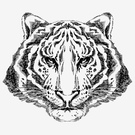 tiger drawing Stock Vector - 7860225