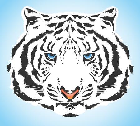 isolated tiger: tigre bianca  Vettoriali