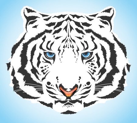 wild asia: white tiger Illustration