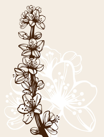 plum flower: Blossom cherry flowers branch high quality detailed drawing