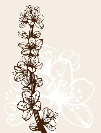 Kersen bloesem bloeit branch hoge kwaliteit gedetailleerde tekening