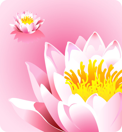 womanlike: beautiful lotus in a pond Illustration
