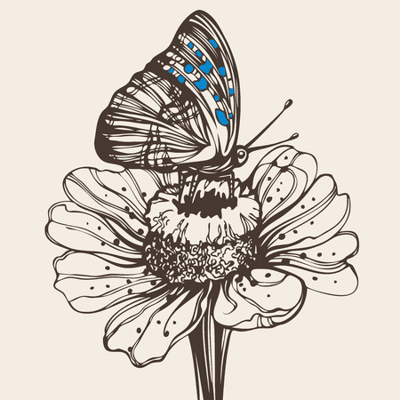 butterfly on a flower Stock Vector - 7860157