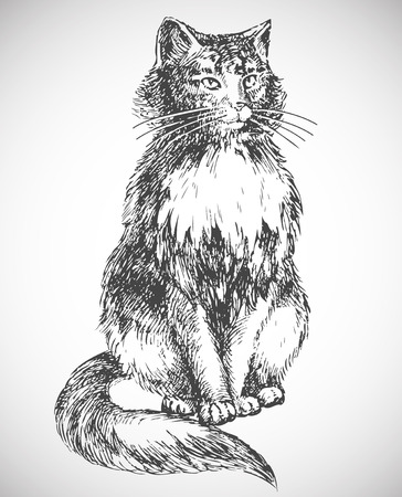 cat drawing Stock Vector - 7991881