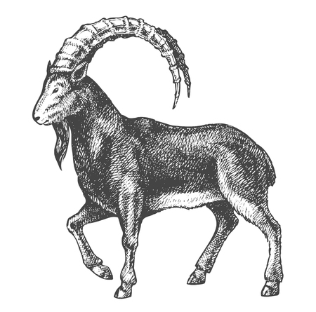 goat professional drawing Vector