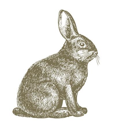 rabbit drawing Stock Vector - 8225364