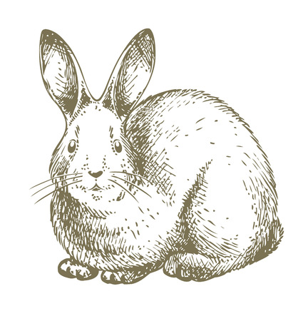 bunny hand drawn illustration - this drawing is great decoration for new chinese year designs Vector