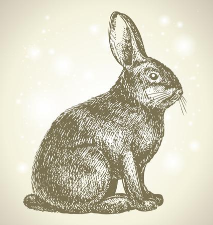 new years bunny Vector
