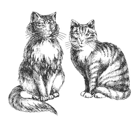 two cats realistic drawing - professional high quality Stock Vector - 8225366
