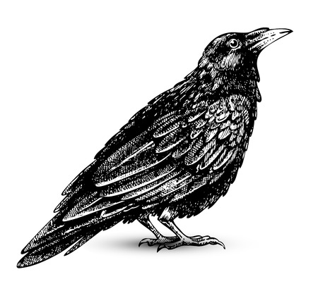 Raven drawing high quality Stock Vector - 8225363