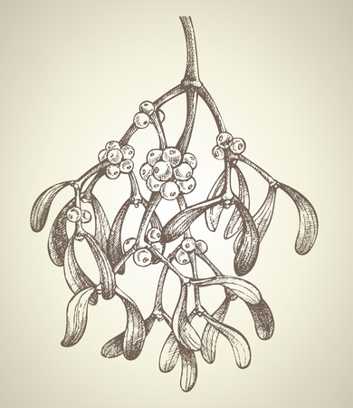 hand made: Christmas mistletoe branch drawing Illustration