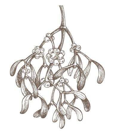 mistletoe branch drawing Stock Vector - 8405992