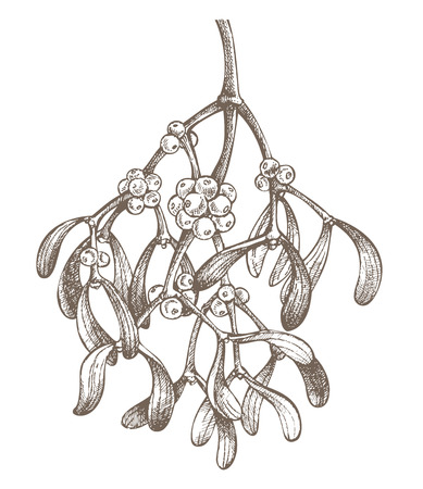 mistletoe branch drawing