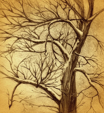 pencil and paper: vintage tree drawing