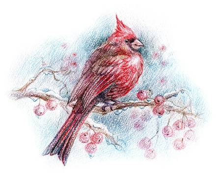 hand drawn wings: red bird on a branch drawing