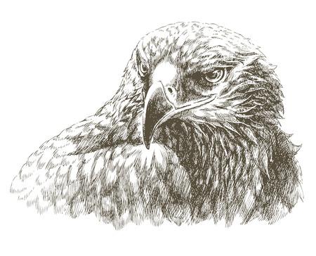 hatched: eagle
