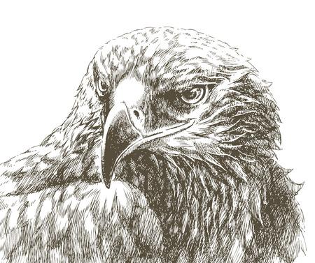 oeil dessin: Eagle ligne art