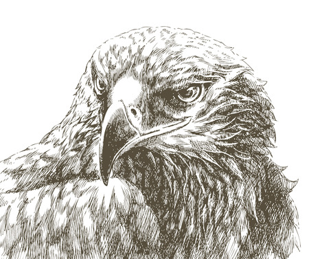 black and white line drawing: eagle line art