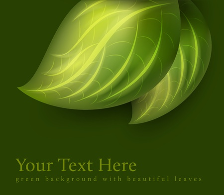 herbal background: green leaves decoration