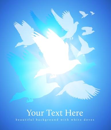 pigeons: arri�re-plan de colombes blanches