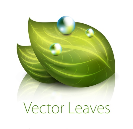 rain drop: Green leaves illustration