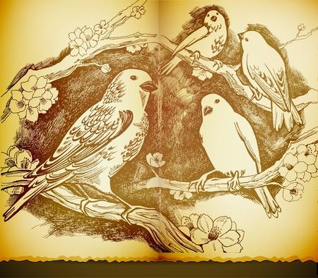 dibujo vintage: cosecha de dibujo con p�jaros y flores