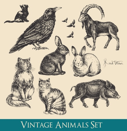 animals in the wild: animals set - raven, cats, flying birds, rabbits, boar, goat Illustration