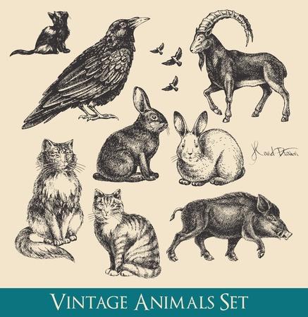 corbeau: animaux �tabli - le corbeau, chats, oiseaux qui volent, des lapins, sangliers, ch�vres Illustration