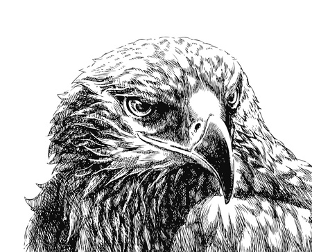 cross hatch: eagle