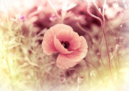 Poppy Flower Vintage Card photo Stock Photo - 10059075