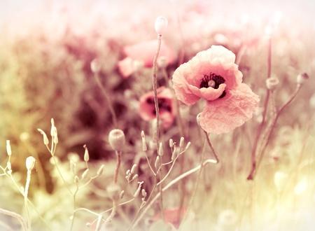 ochtend bloemen weide - vintage Foto-achterwand