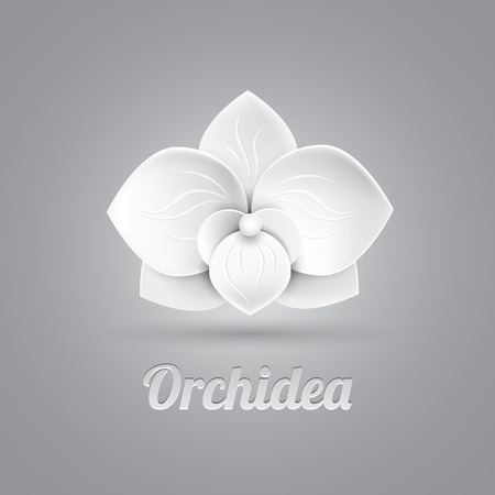 white orchids: flower logo icon vector - white