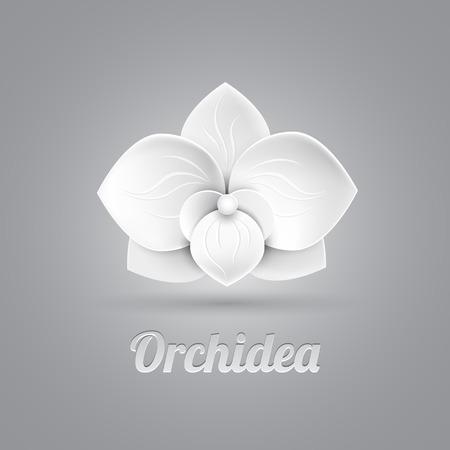 fleur logo icône vecteur - blanc