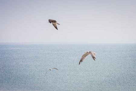 Gulls sailing the sky