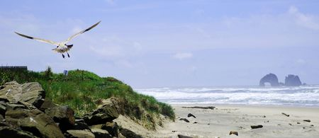 seagull on the oceanside