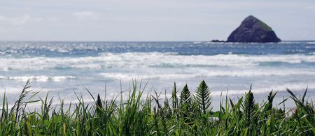 green grass on the oceanside, oregon, usa photo
