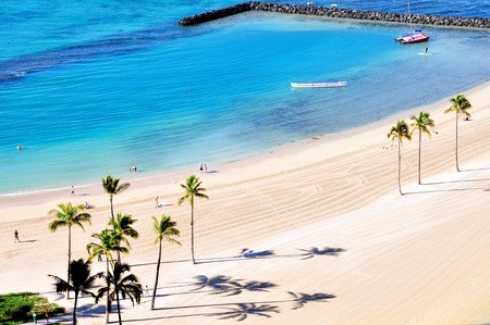 palms on the waikiki beach  Stock Photo