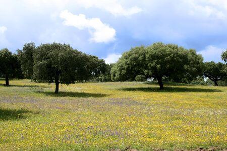 tree marigold: peaceful and colorful zen landscape in alentejo (portugal)