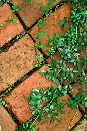 ivy in a brick soil making a graphic background
