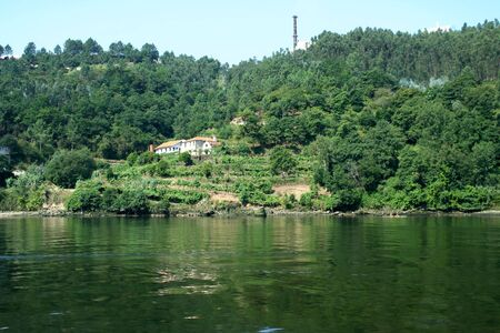 vineyard near river douro in north of portugal photo