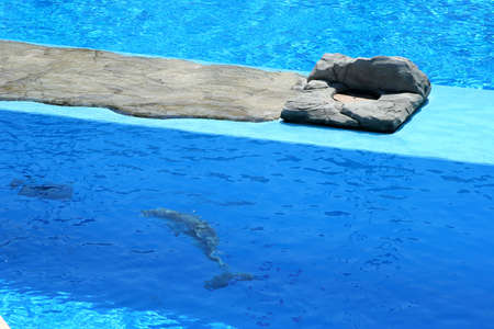 pool with blue and clear waters and a dolphin underwater Stock Photo