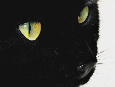 Face of black cat in close up, his big and green, gleaming hair seen from the side