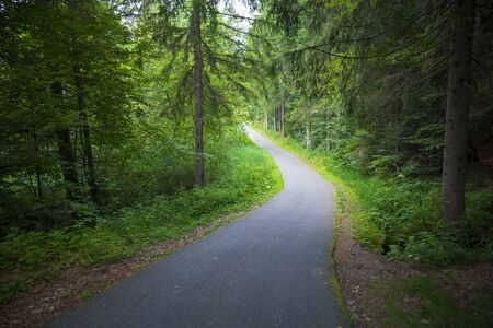 downhill winding road in green forest scenery.