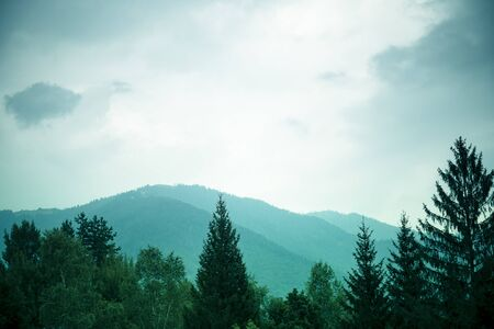 Mountains background with tree tops in the foreground under an overcast moody sky. Green fillter. Banco de Imagens
