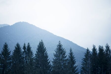 Mountains background with tree tops in the foreground under a grey moody sky. Cold tones, blue filter.