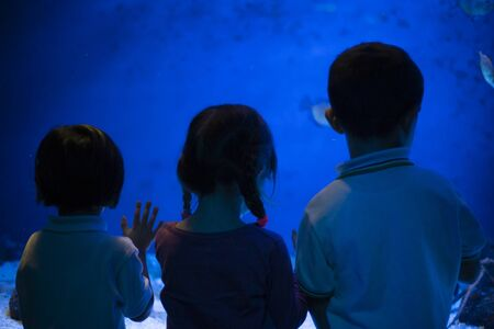 three Children at the aquarium, rear view, watching fishes through glass