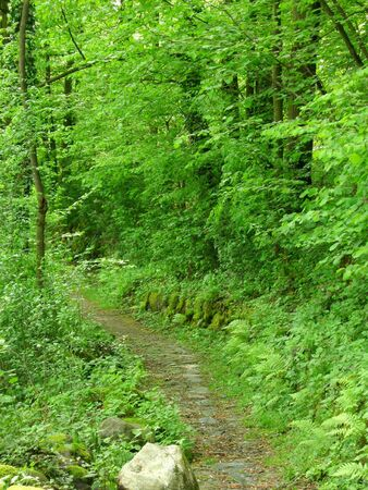 pictoresque: Path in a green grove of trees Stock Photo